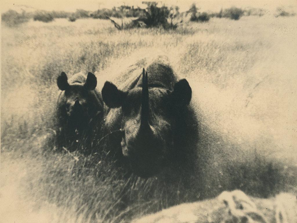 Chas killed by Rhino in Siana Area